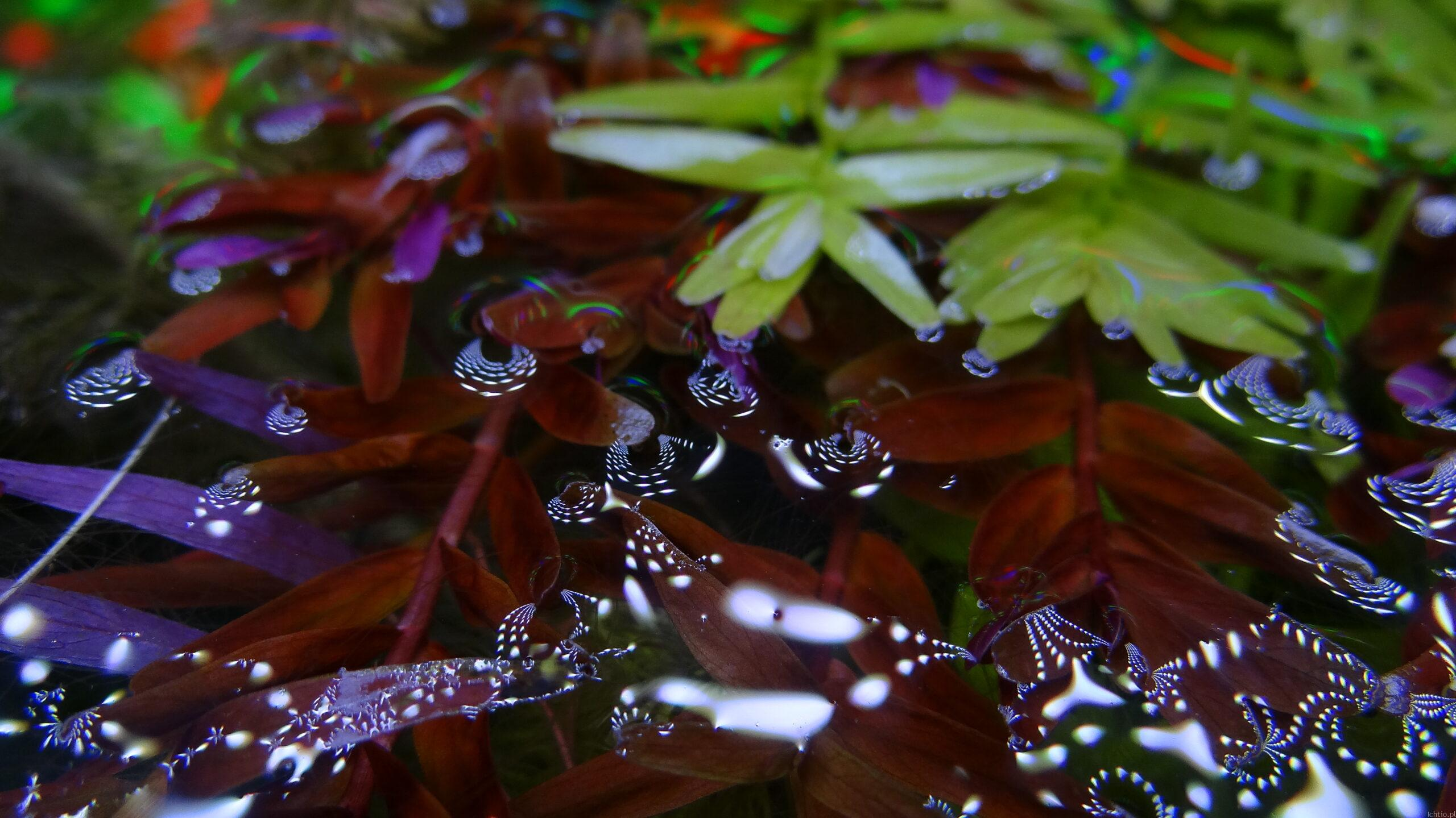 Aquaszop rośliny